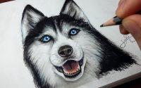 Comment dessiner un chien : Husky [Tutoriel]