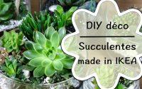 DIY - Créer une décoration de succulentes   tutoriel facile de succulentes made in IKEA #1