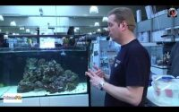Tutoriel démarrer un aquarium marin pas a pas Introduction des poissons