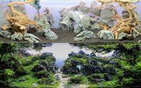 Aquarium aquascaping Frontera - Enfin le tutoriel de sa reproduction