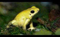 le syndrome de la grenouille. Une une leçon de vie #100
