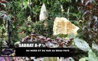 Leçon 12 : Sabbat après-midi 14 Mars 2020, Du nord et du sud au beau pays