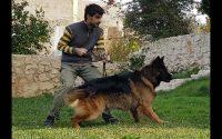 Leçon 15 - Conseils et astuces berger allemand - German Shepherd training tips and tricks 2
