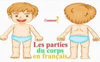 Les parties du corps en français leçon de vocabulaire