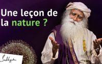 Est-ce que la nature nous donne une leçon ?   Sadhguru Francais