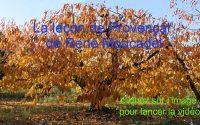 La leçon de Provençal n°9