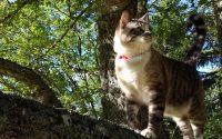 Tutoriel balise GPS Weenect pour mon chat (version courte)