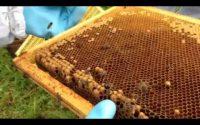 Leçon d'apiculture n°2 : apprendre à observer