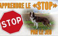 """TUTORIEL Apprendre le """"STOP"""" par le Jeu"""