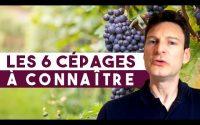 Les 6 cépages à connaître pour bien débuter dans le vin (Leçon 57)