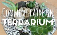 Tutoriel : Comment faire un terrarium ? (facile)