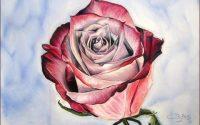 [Pastels secs] Tutoriel : Comment dessiner une rose ?
