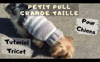 DIY Tricot: Pull pour chiens de 5 kg Tutoriel