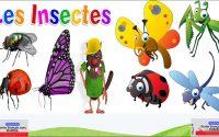 Leçon 9:savoir les noms des insectes/الدرس 9: معرفة أسماء الحشرات