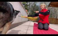Tutoriel comment apprendre au chien le saut par dessus les bras en 3 étapes ( Glenny Border )