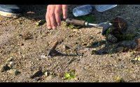 Leçon de pêche aux couteaux avec Charles Giraud