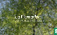 #1 PLANTATION - Tutoriel