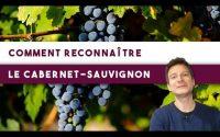 4 clés pour mieux reconnaître le cabernet-sauvignon 🍇 (Leçon n°117)