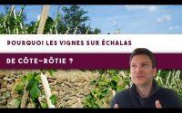 8 minutes pour comprendre les vignes sur échalas de Côte-Rôtie 🍇 (Leçon n°123)