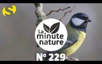 CHANTS D'OISEAUX, LEÇON 13 (No 229)