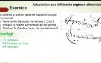 Exercices - Cinquième - SVT : Leçon 3  l'alimentation chez les animaux/ exercice 1 / Mr Diallo