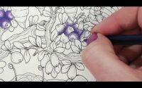 Tutoriel myrtille au prismacolor simple et rapide