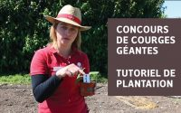 Tutoriel de plantation de courges géantes | Concours