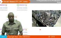 IP-OVS TRAVAIL MANUEL 3ème/A3 Leçon 1 Organisation de l'élevage de poisson