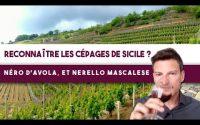 Comment RECONNAÎTRE les 2 grands CÉPAGES rouges de Sicile ? (Leçon n°163)🍇