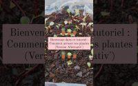 Tutoriel : Comment arroser ses plantes ? (version ALTernativ')